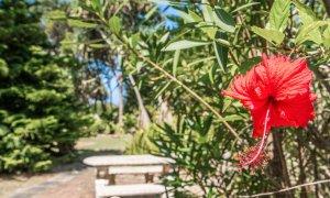 Gigis - Byron Bay - walking track to beach