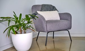 Greenview - Lennox Head - Chair and Plant