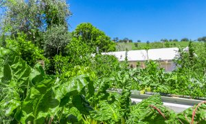 Coorabell Cottages - Rainforest Cottage - Lush Green Garden