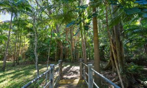 Paperbark - Byron Bay - Rainforest Walk